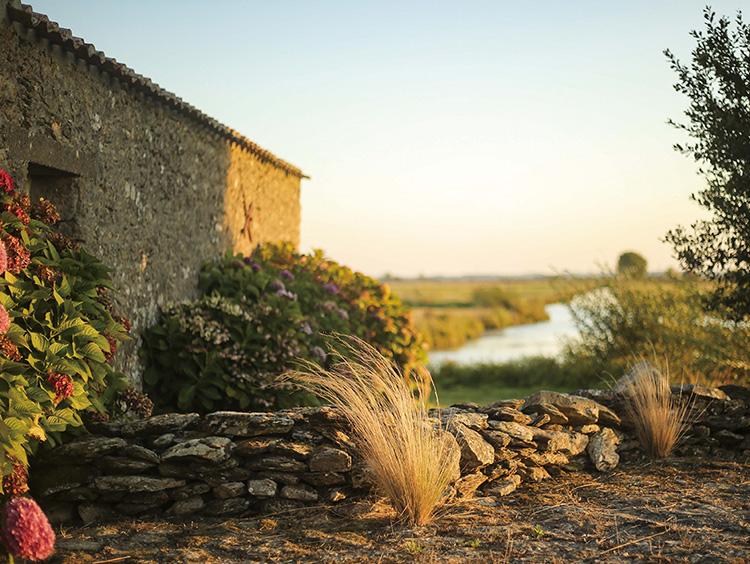 マシュクール村の朝の静かな風景