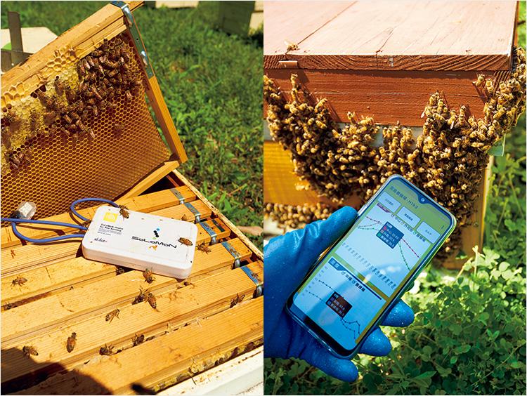 <はつはな果蜂園>宮島はちみつと養蜂の様子