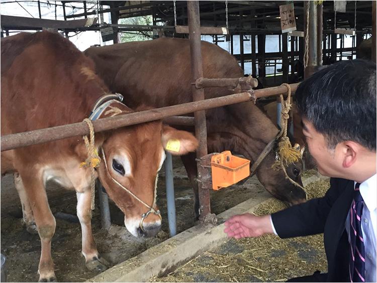 <オオヤブデイリーファーム>の牛舎画像