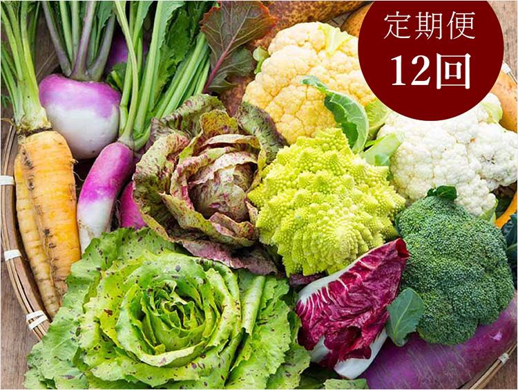 <吉野ヶ里あいちゃん農園>イタリア野菜セット7品 定期便(年12回)