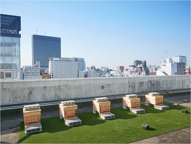 <MIEL ISETAN SHINJUKU>©を採蜜する巣箱