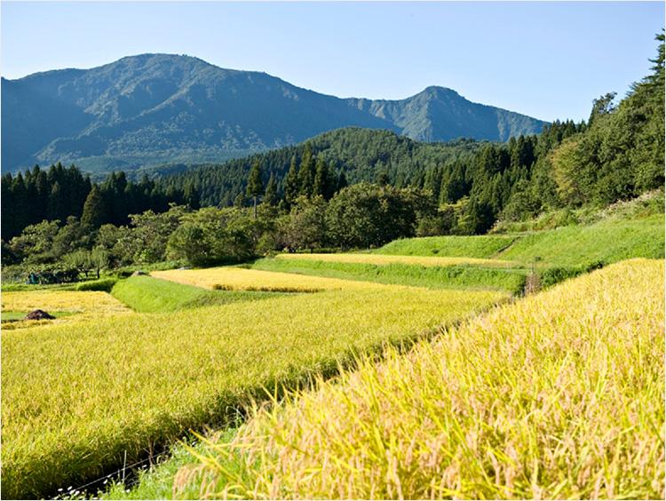 米ぬかの原料となる米の生産地
